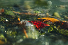 Underwater Treasure (charhedman - on and off) Tags: underwatertreasure deepcove stream ocean water undertow autumnleaves bubbles rocls macro