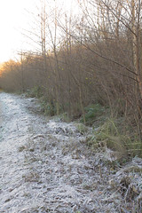 Winter Kent Hedgerows (Adam Swaine) Tags: hedges leaves frost paths winter kent walks ighthammote kentweald seasons ukcounties canon hedgerows england english britain swaine