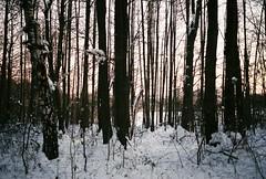 3s backmango Analog, noedit (backmango) Tags: siluetter sn snow silhouette silhouettes backlight trees tree tre flickr picoftheday photooftheday bestoftheday minoltasrt minolta filmisnotdead 35mm film analog sunset
