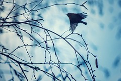 a winter*fairy (***toile filante***) Tags: bird vogel tree baum ste zweige branches nature natur moment augenblick animal dof bokeh dreamy poetic poetisch tier