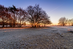 Ice cold! (Jantje1972) Tags: mist frost fog sunrise tree cold forest icecold sand sun nationalpark ngc
