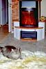 008_05a (d_fust) Tags: cat kitten gato katze 猫 macska gatto fust kedi 貓 anak katt gatito kissa kätzchen gattino kucing 小貓 고양이 katje кот γάτα γατάκι แมว yavrusu 仔猫 का skorpi बिल्ली बच्चा