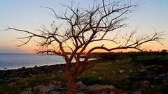 Winter tree / rbol invernal (Feches) Tags: winter sunset orange plant tree colors rio river atardecer warm colores invierno naranja calido