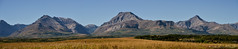 Late Summer Panorama (Witty nickname) Tags: summer panorama mountain mountains nature landscape golden pano bluesky panoramic alberta rockymountains clearsky waterton d800 70200mm latesummer albertalandscape ruggedpeaks nikond800 nikkor70200mmf28vrii