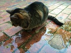266/365 bashful (retrokatz) Tags: cat zelda
