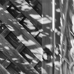 Retro 365 - Day #249 (cazphoto.co.uk) Tags: slr film monochrome garden mono wooden gate shadows vintagecamera singlelensreflex ilforddelta100 120rollfilm agilux filmproject 060915 agiflex retro365 agiluxanastigmat80mmf35