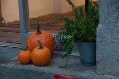 DSC_0958.jpg (mauriziochialastri) Tags: newyork halloween carnevale sangue maschera citt maschere paura terrore ragnatele statiunito