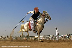 Tent Pegging in Punjab , Pakistan 2- Photo by Bilal Javaid