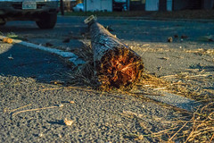 Snapped Pole (Simply Angle) Tags: storm tree cars lines power wind down damage trunk debri canonfd a7ii canonfd50mmf18 deerparkwa sonyphotographing sonyphotography ilce7m2