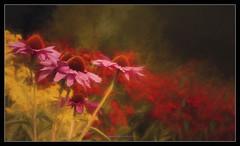 Le jardin de nuit (The Night Garden) (patrice ouellet) Tags: patricephotographiste thenightgarden lejardindenuit impressionnisme impressionnism red rouge fleurs flowers