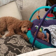 cooper-looking-after-his-little-brother--cooper-is-one-of-honeys-boys-_15379916155_o
