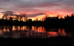 Sunset over the Botanical Gardens (Dizzy-O) Tags: pink trees sunset sky orange reflection water silhouette clouds pond branches rhodeisland botanicalgardens rogerwilliamspark