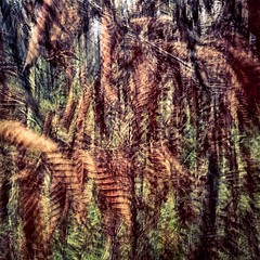 windig (diemause) Tags: leave deutschland herbst experiment braun blatt blätter hattingen lenka langzeitbelichtung bergerhof iphonography smartphonography lenkaapp