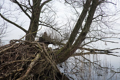 diemerzeedijk (hansfoto) Tags: tree boom fallen diemerzeedijk ijmeer omgevallen