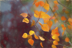 Autumn strokes and warm colors - ODC (Exdeltalady) Tags: autumn leaves painting chalk fall orange yellow topaz tamron canon 7d october leaf colors watercolors medium artistic muted odc warmcolors explore