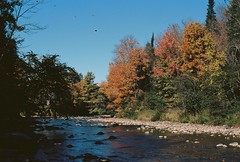 Waits River Foliage (Nsharp17) Tags: nikon nikonfe film 35mm kodak ektar ektar100 fall autumn trees riverbank river creek vermont