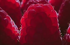 Raspberry Light (Hanna Tor) Tags: light food berry red macromonday raspberry backlit macro