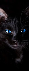 Magnificent cat with striking blue eyes via http://ift.tt/29KELz0 (dozhub) Tags: cat kitty kitten cute funny aww adorable cats