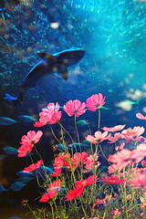 -bloom in the deep sea (Hodaka Yamamoto) Tags: lomography double doubles doubleexposure multipleexposure multiexposure shark fish sea cosmos flower autumn fall aquarium dolphin