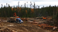 Barker Logging (jr-transport) Tags: peterbilt 367 heavy haul spec timrick slasher log skidder johndeere 848 hyundai dleimberdenharco limmit manac logging trailer custom ontario woods forestry