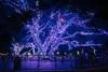 Savoye Trees (MikeyBNguyen) Tags: addison vitruvianpark vitruvianlights vsco vscofilm nightphotography texas unitedstates us christmaslights christmastree christmastrees christmas longexposure