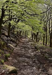 24739 (benbobjr) Tags: westyorkshire yorkshire yorkshireandthehumber calderdale metropolitanboroughofcalderdale metropolitanboroughofwestyorkshire hebdenroyd hebdenbridge uppercaldervalley hebbleend heptonstall steps stairs path pathway footpath bridleway publicfootpath eaveswood wood forest eavesavenue