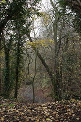IMG_8868 (Geoff_B) Tags: badockswood bristol walkinthewoods autumn november unprocessed unedited