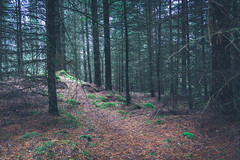 Colours of the forest. (Ian Emerson) Tags: woodland forest colourful colours pine floor autumn september scotland light outdoor canon moss greenery brown leaves