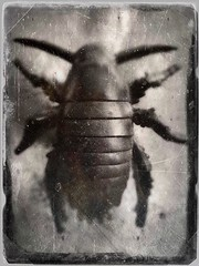(toy) Bug-9218 (Poetic Medium) Tags: blackandwhite tintype possession plastic ipod bug toy