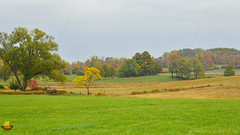 Rainy Fall Day (DTD_5242) (masinka) Tags: eastaurora newyork unitedstates ny buffalo southtowns trees yellow green foliage fall autumn coutryside rural landscape land photography etbtsy colors nature fields divided patches drizzle rainy drizzly cloudy weather