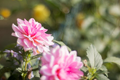 TOP (TimsPhotos_) Tags: bokeh flower flowers outdoor canon