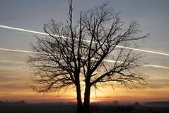 kleine Eiche (fotio14) Tags: eiche abendstimmung dmmerung landschaft himmel