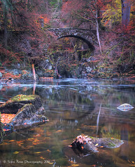 utumn at the Hermitage (silverlarynx) Tags: hermitage dunkeld scotland autumn bridge le highlands river braan