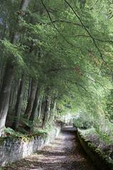 Doune back road (KClarkPhotography) Tags: scotland travel kclarkphotography doune rural mossy green soft dreamy romantic