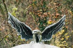 hawk statue (FleshTriad) Tags: hawk falke statue