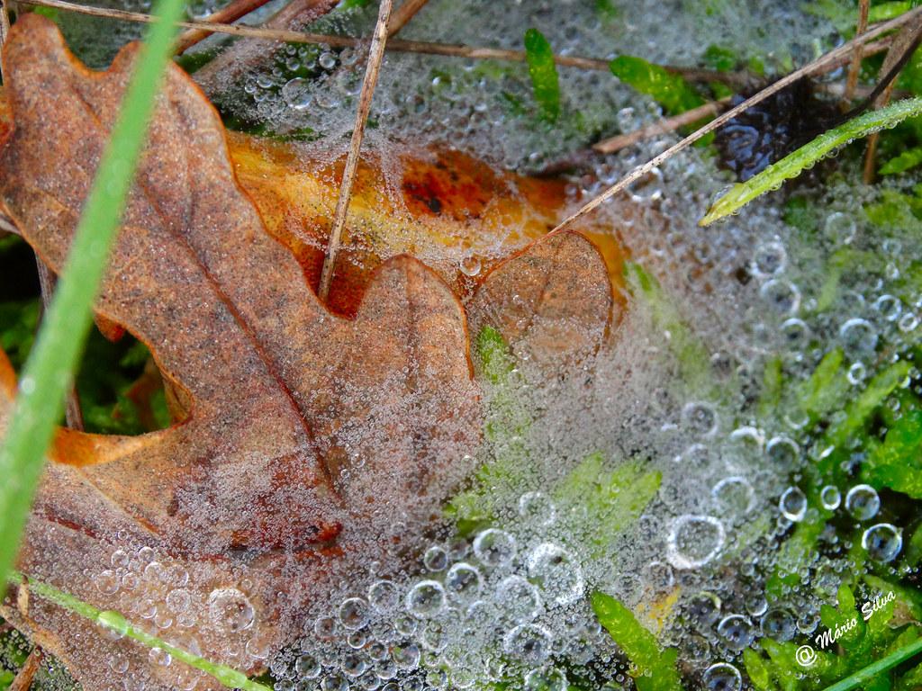 Águas Frias (Chaves) - ... gotas de orvalho numa teia de aranha ...