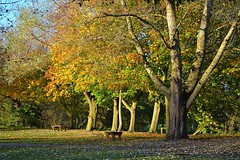 Autumn Scene at Needham (DaveJC90) Tags: suffolk view landscape autumn scene tree walk walking morning afternoon path footpath brown yellow green grass leaf leaves beauty beautiful sun sunny sunlight light bright field sky blue cloud dark shadow early winter colour colours crop croped nikon d5100 digital slr camera wide angle zoom lens 1020mm 1855mm detail sharp sharpness needham needhamlakes needhammarket water lake reflection bench explore explored