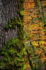 """Moss on tree"" (aspolatt) Tags: photomatix nature jungle 105mm green forest trees hdrworld nikon 3px hdr"