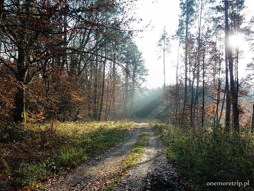 161110-123620-luboradza lasy