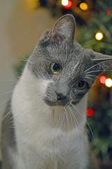 DSC_0065 (kaymann+l+woo) Tags: catsofinstagram cute cats
