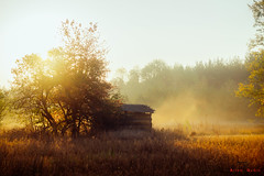 Just early morning on the farm (UkrainianGentleman) Tags: sun sunrise scenic fascinating nature scenery dawn wallpaper landscape shadows fog mist sony adventure ground early flora texture a58 autumn yellow beauty background colors light leadlight leaf tree forest wood barn farm village woodland view morning atmospheric reflection goldautumn fall amazing misty ukraine