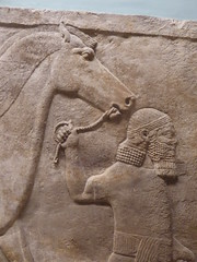 Man leading Horse (Aidan McRae Thomson) Tags: nimrud assyrian relief sculpture ancient mesopotamia britishmuseum london