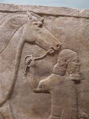 Man leading Horse (Aidan McRae Thomson) Tags: nimrud assyrian relief sculpture ancient mesopotamia britishmuseum london
