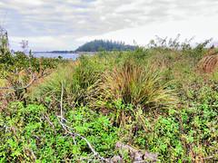 Marsh Wren sit spot HDR 20161119 (Kenneth Cole Schneider) Tags: florida miramar westbrowardwca