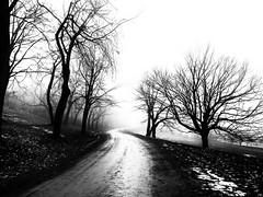 Solitude (Duric) Tags: bw blackandwhite blancoynegro parc brouillard fog silhouette novembre automne solitude sentier chemin arbres neige