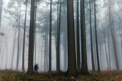 Ghost sighting during misty evening. (stray_light_rays) Tags: blue trees ghost ghosts pine forestphotography forests nobody nothingness autumn dark evening woodland treetrunk