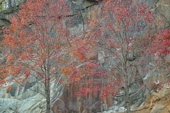 cliff face (tcd123usa) Tags: leicadlux4 alapocaspark wilmingtondelaware nature autumn autumn2016 naturestextures redtags