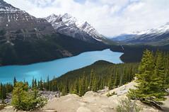 Peyto Lake (leuntje) Tags: peytolake banffnationalpark banff alberta canada waputikvalley icefieldparkway bowsummit canadianrockies unesco unescoworldheritagesite billpeyto unescoworldheritage