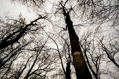 flood level (cleotalk) Tags: asbury trails ky kentucky hiking wilmore flood trees forest