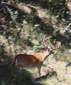 Texas Trophy Hunting - Brownwood whitetail 54